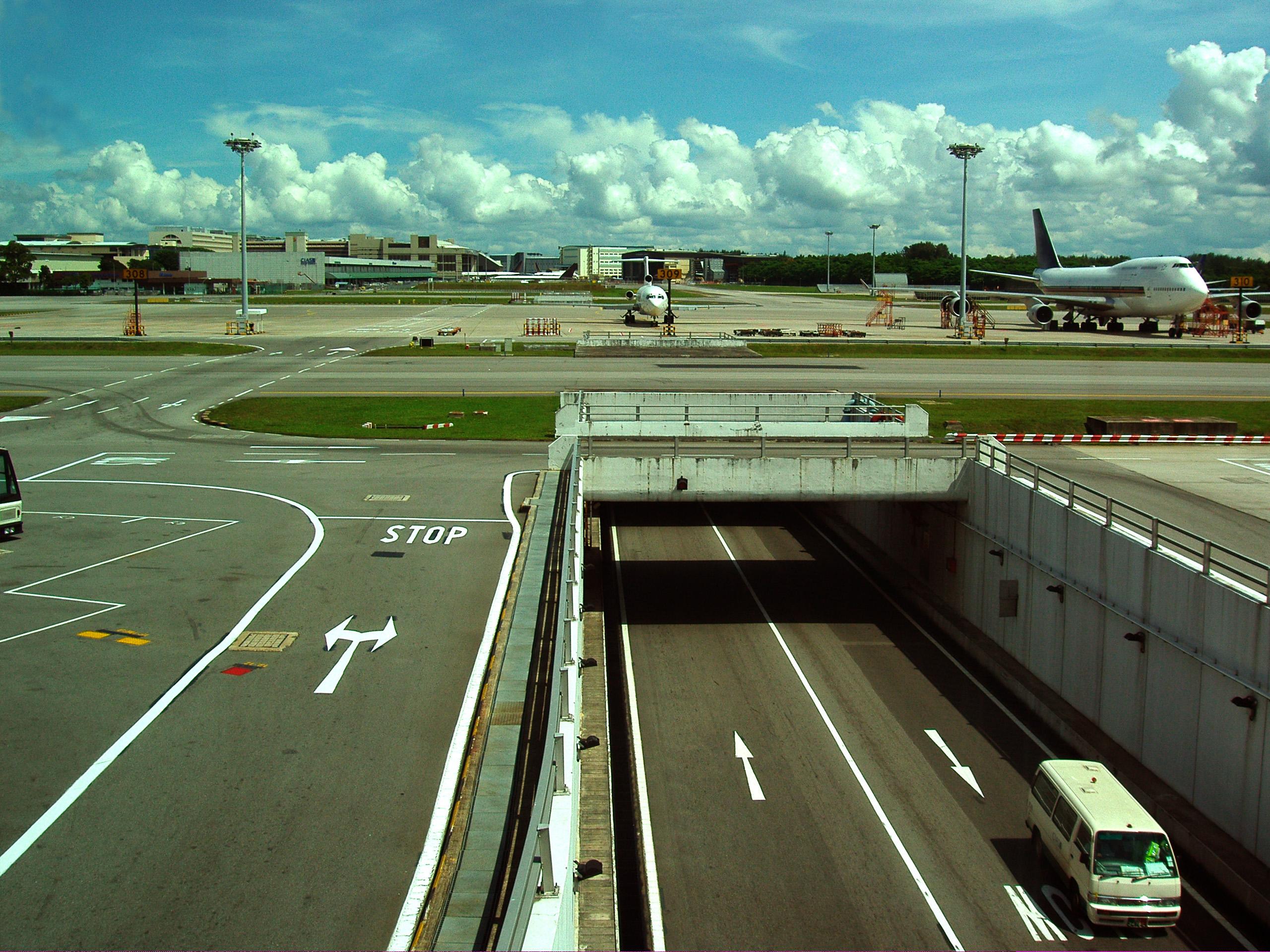 El aeropuerto de JFK investiga por qué un grupo de tortugas invade sus pistas