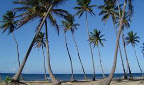 Europa (21.5%) y Norteamérica (4.5%) lideran incremento de llegada de turistas a Rep. Dominicana