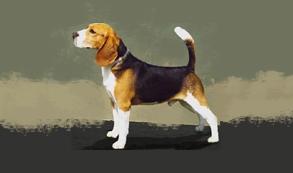 Un perro se cuela en la pista del aeropuerto de La Palma y frustra varios aterrizajes
