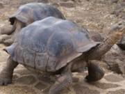 tortugas-galapagos