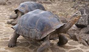 El Salvador busca fomentar el turismo ambiental con la liberación de 500 tortugas