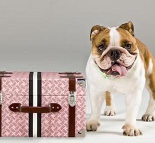 Vacunas gratis para mascotas en el aeropuerto de Fisherton