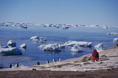 Desarrollo del turismo en la Antártida Argentina
