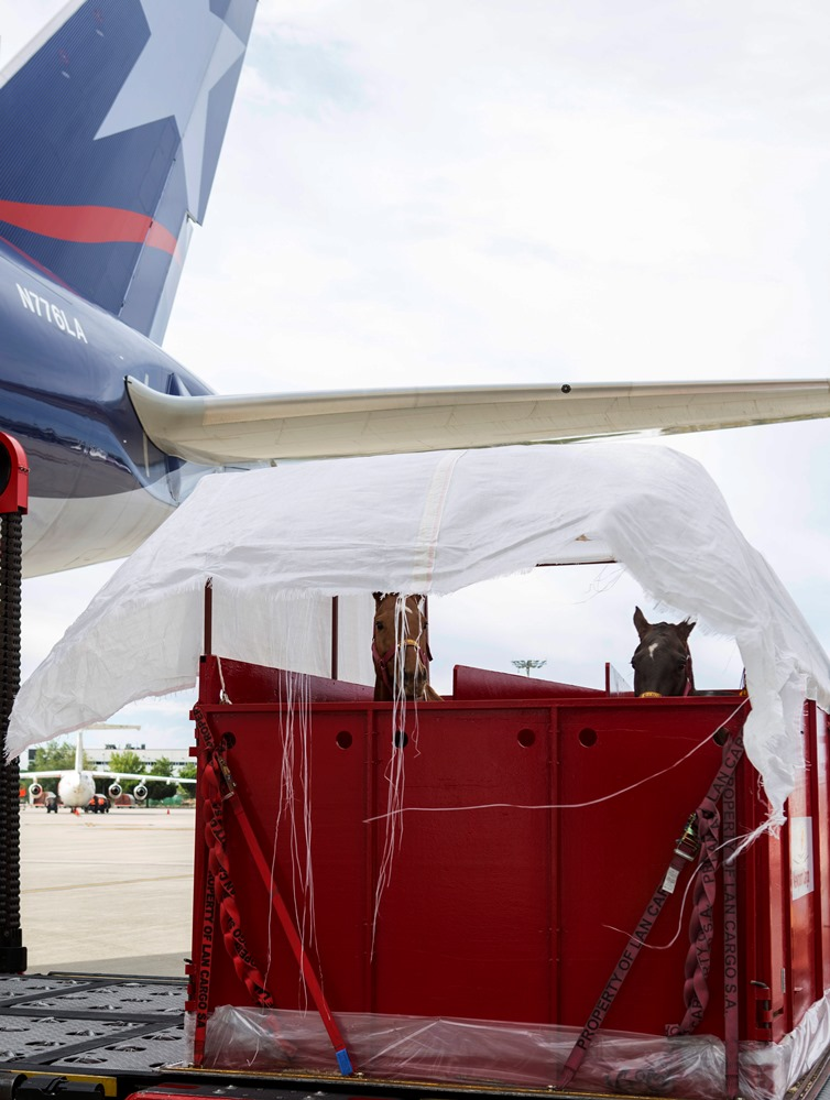"""IATA lays out plans for Live Animal, """"˜Fresh""""™ CEIV certifications"""