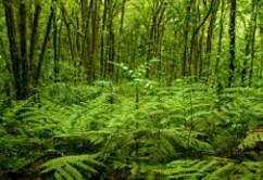 selva-costa-rica