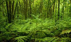 CCT: Costa Rica debe seguir apostando por el ecoturismo