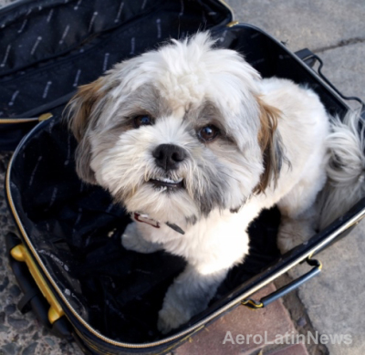 Perro y maleta 1