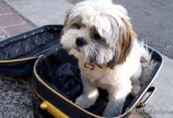 Perro y maleta 2