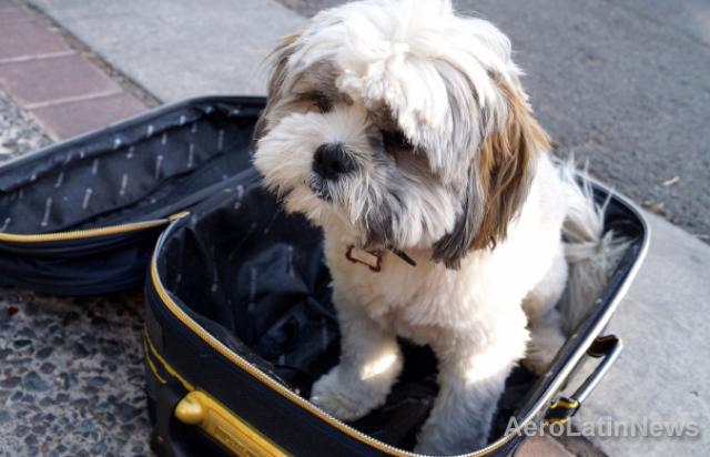Viajaba con su cachorro y la aerolínea lo mandó a otro destino sin querer