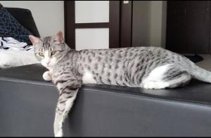 Se busca gata extraviada en aeropuerto de Cartagena