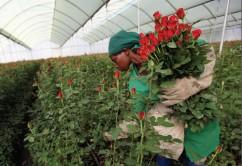 Kenyan Flowers