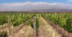Mendoza vino