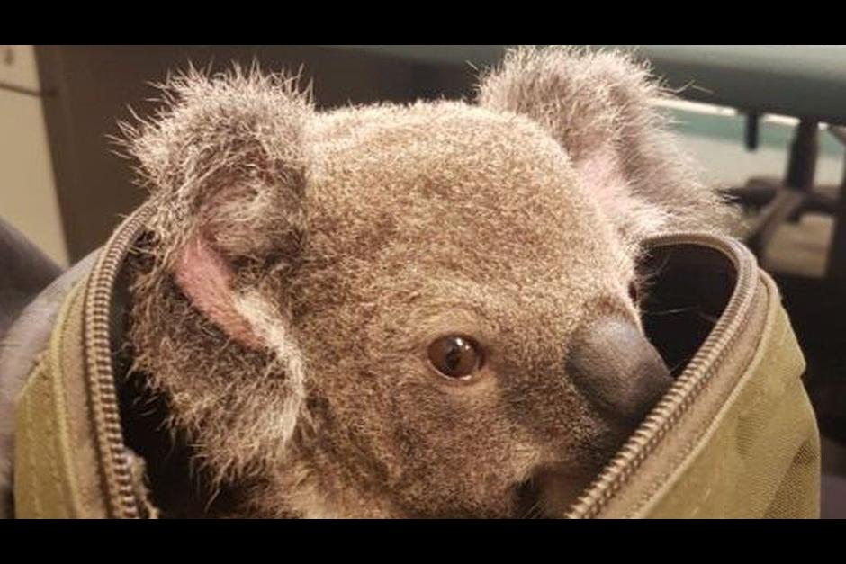 Cambio climático amenaza el turismo en Australia