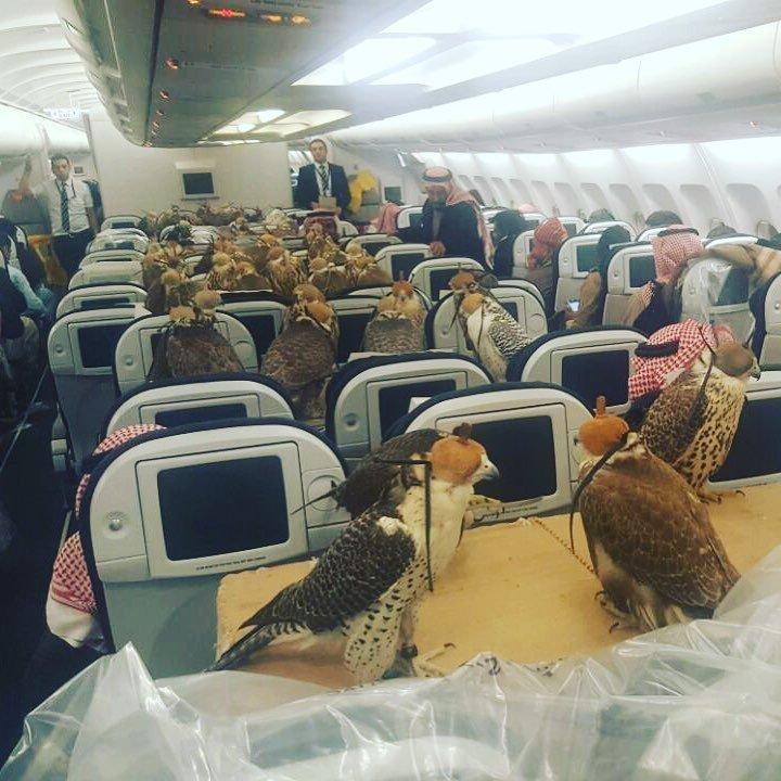 Un avión lleno de halcones nos muestra otro aspecto del sector pet friendly