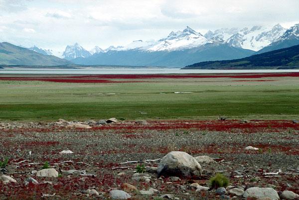 """""""Patagonia fósil"""", la guía de turismo científico que nos transporta a la era de los dinosaurios"""