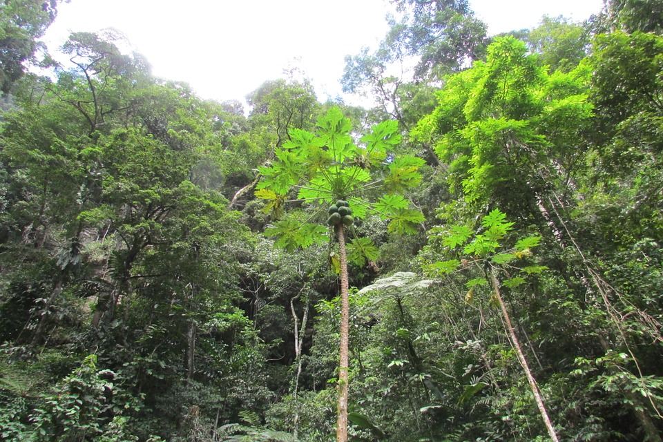 Razones para viajar ahora mismo a Yurimaguas, pintura de la selva peruana