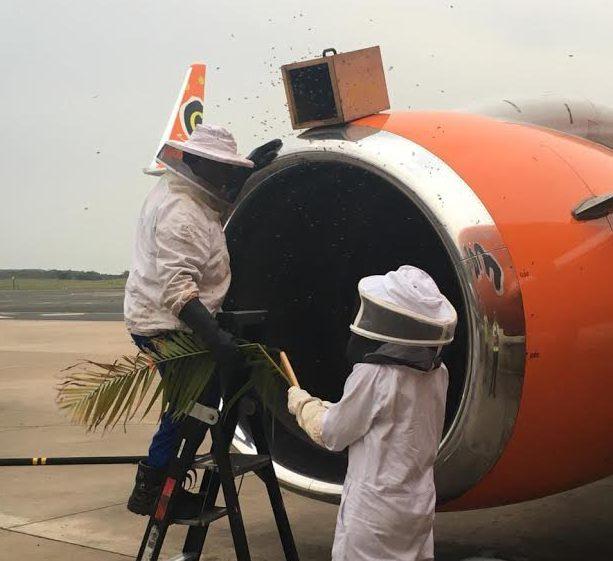 Más de 20.000 abejas causan el retraso de tres vuelos