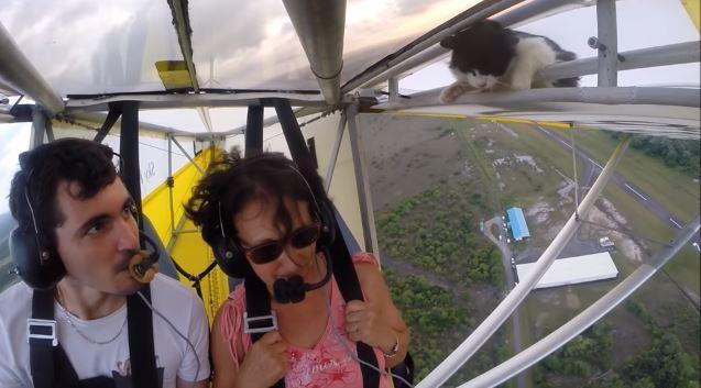 Un gato se 'infiltra' en vuelo de aeronave y tiene este impensado final