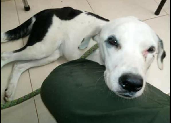 Murió una perrita esperando a sus dueños que la abandonaron en un aeropuerto