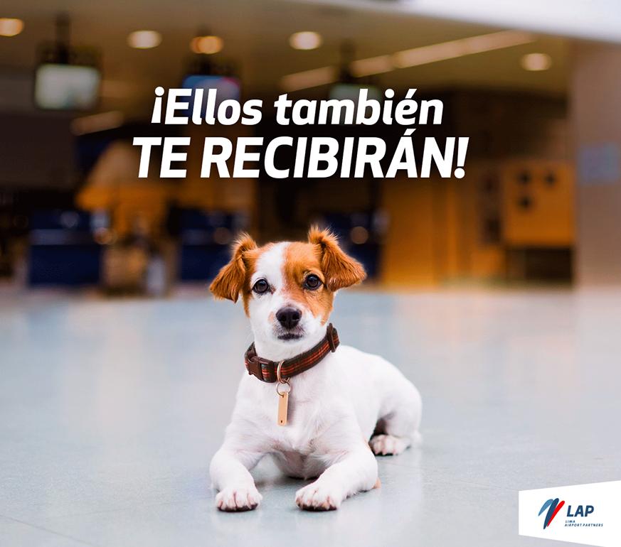 ¿Sabías que las mascotas pueden entrar al Aeropuerto Jorge Chávez?
