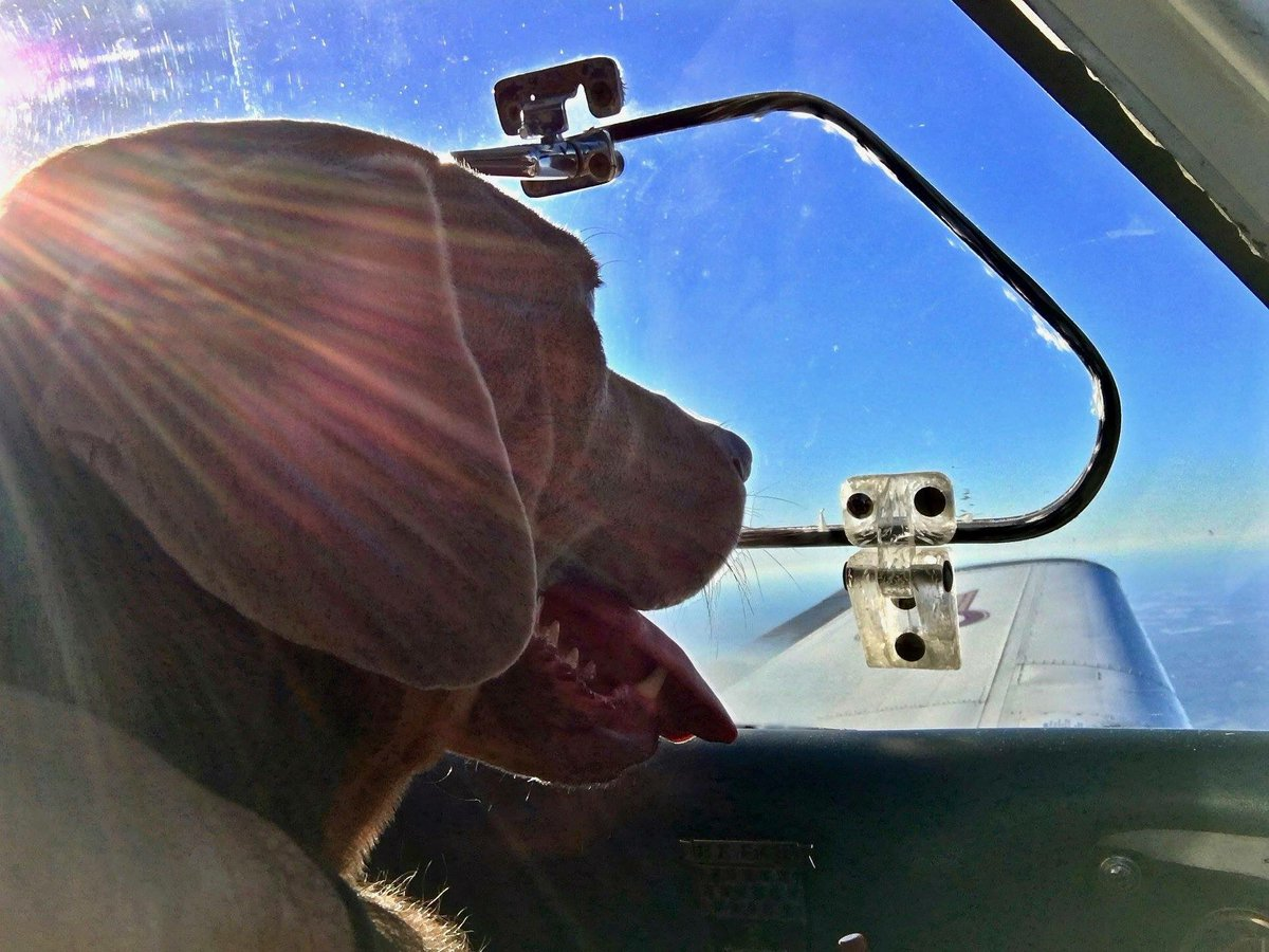 Compró un avión para rescatar a cientos de perros a punto de ser sacrificados