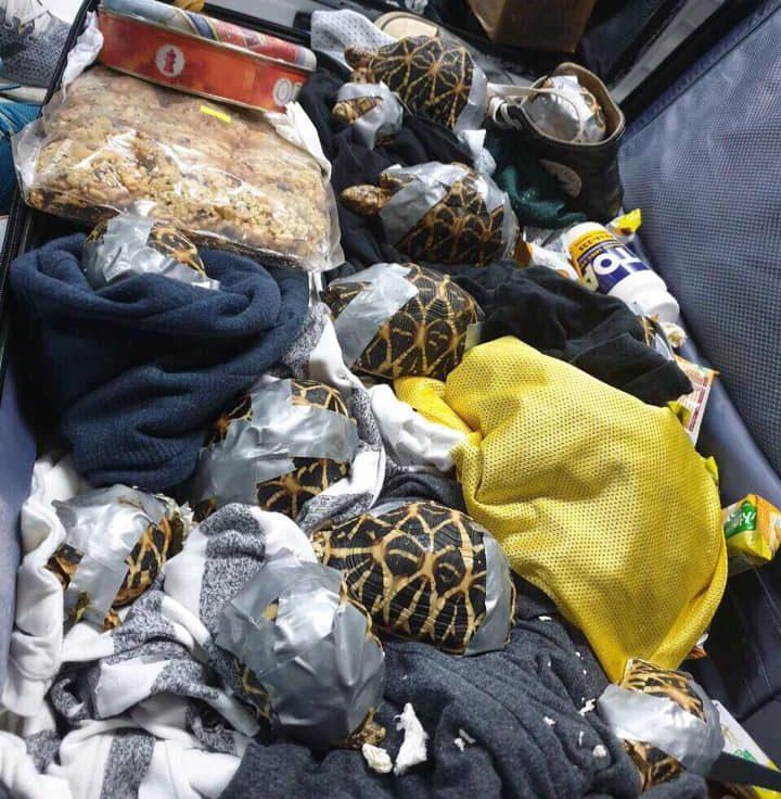 Encuentran 1.529 tortugas exóticas en maletas en el aeropuerto de Manila
