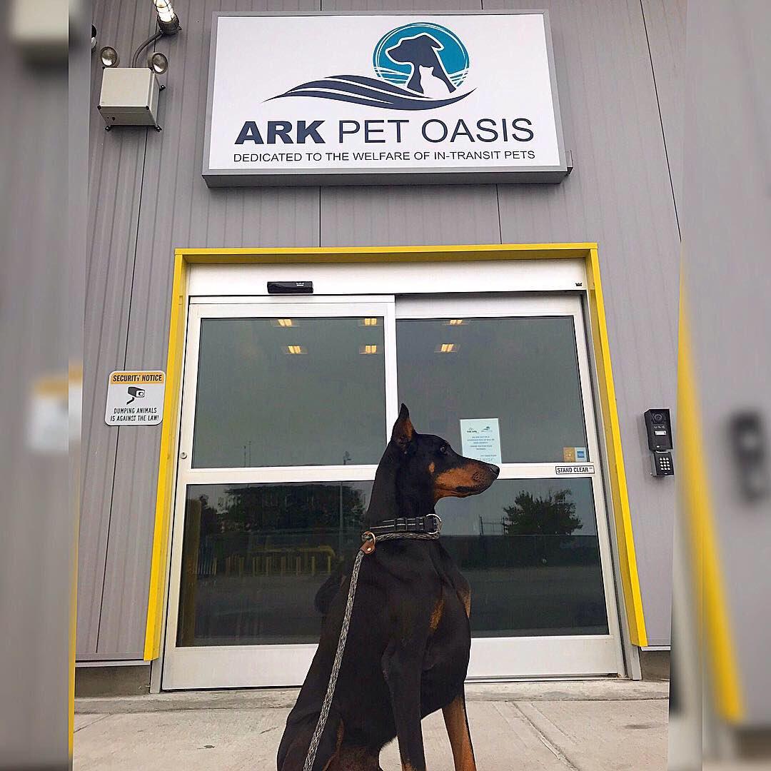 Aeropuerto de Nueva York tiene un 'paraíso' para mascotas que llegan a él
