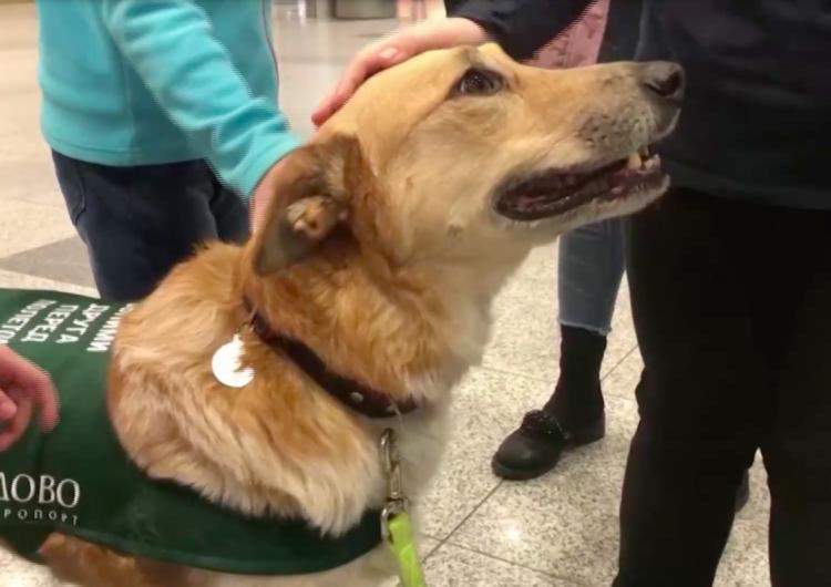 Los perros que combaten el estrés a volar